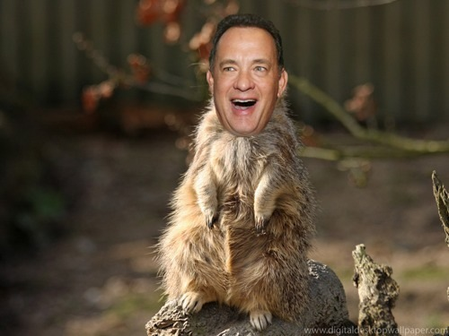 Tom Hanks is a Lot of Animals | LostFocus